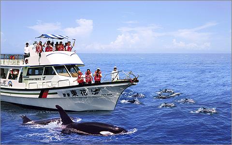 花蓮-鯨世界賞鯨雙人優惠《成人票券x2》