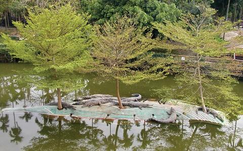 屏東-不一樣鱷魚生態休閒農場精緻單人美食體驗一日券《優惠票券x1》